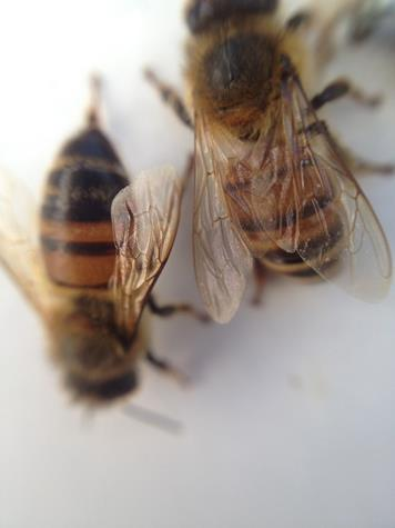 bees up close