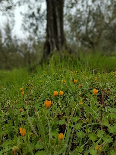 wildflowers-at-domenica-fiore