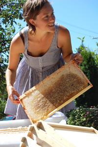 Mellifera Bees Honey